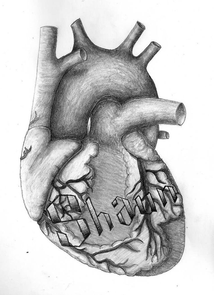33 best actual heart outline tattoo design images on pinterest, Muscles