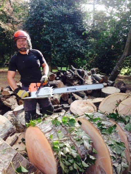 Cutting a Fallen Tree