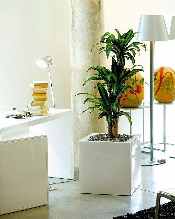 17 best images about salas de espera on pinterest raised - Plantas de interior para salon ...