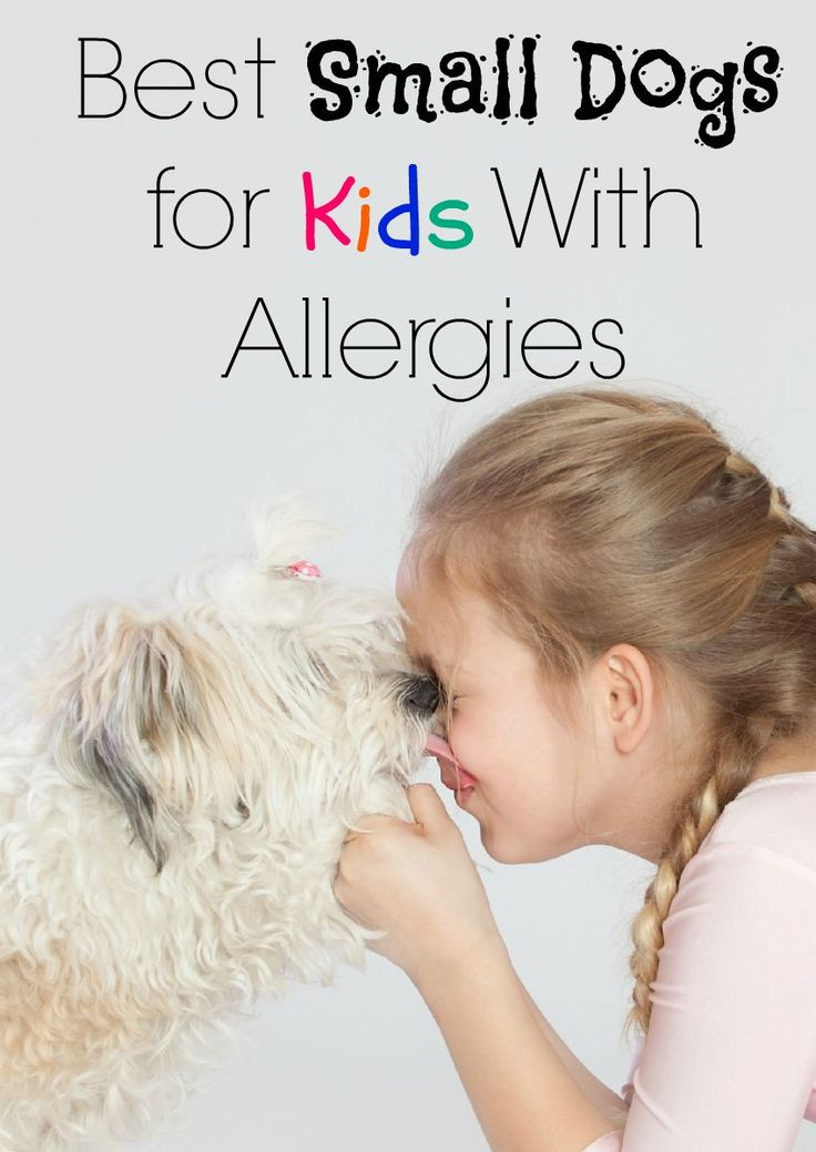 Best Small Dogs for Kids With Allergies