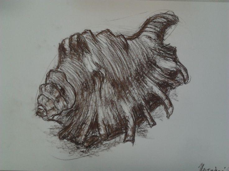 Studijní kresba mušle (rudkou)