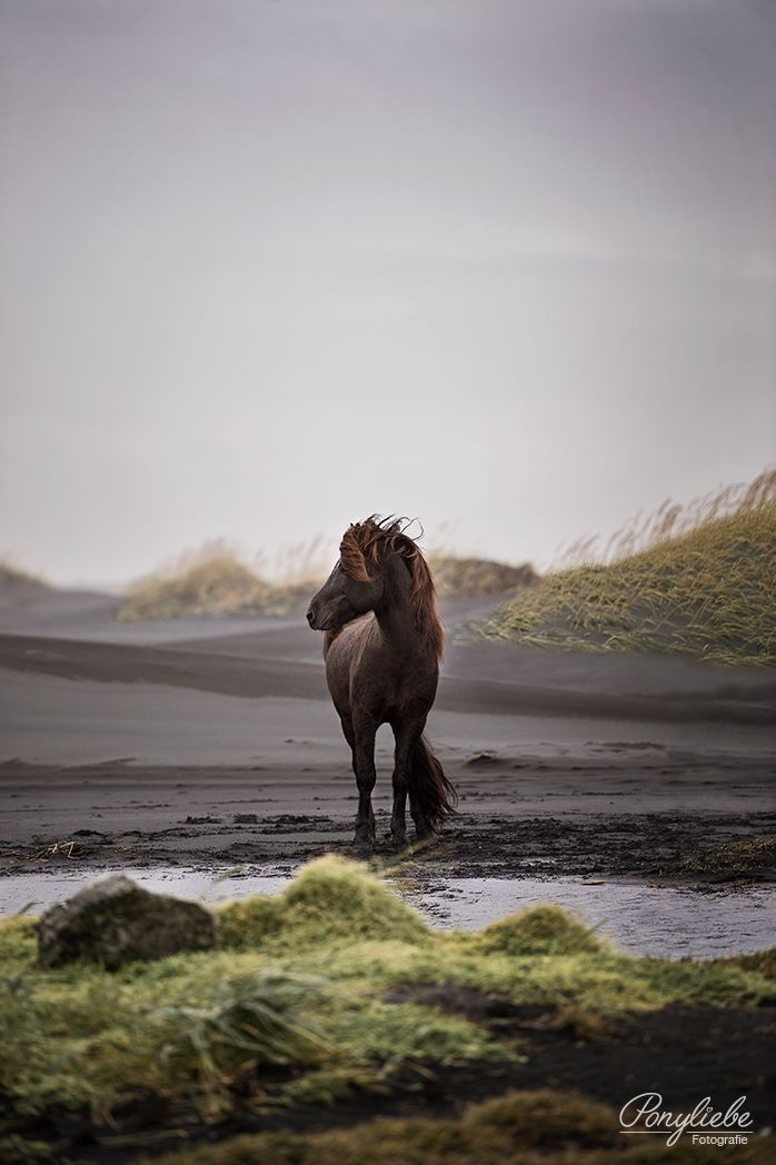 Am I the only one out here? Horse Photography by Ponyliebe Fotogra … – Pferdefotografie Inspiration