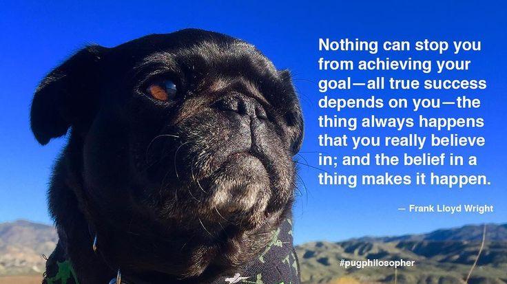Today's Dose of Pug Wisdom: https://nebb.me/2oagiYA #nursenebbie #pugphilosopher