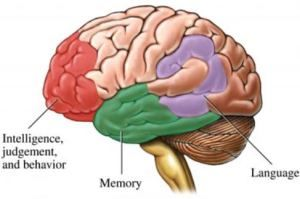 Great confusion surrounds dementia and Alzheimer's disease most likely due to media using the words interchangeably. Dementia is an umbrella term to describe a group of symptoms. Alzheimer's disease is the most common cause of these symptoms. Read about it here at http://monarcaresblog.com/2013/05/16/dementia-vs-alzheimers-disease/ #Dementia #Alzheimer'sDisease