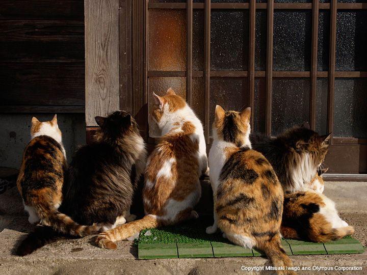 日本-2   ネコギャラリー   デジタル岩合 動物写真家・岩合光昭氏 公認サイト