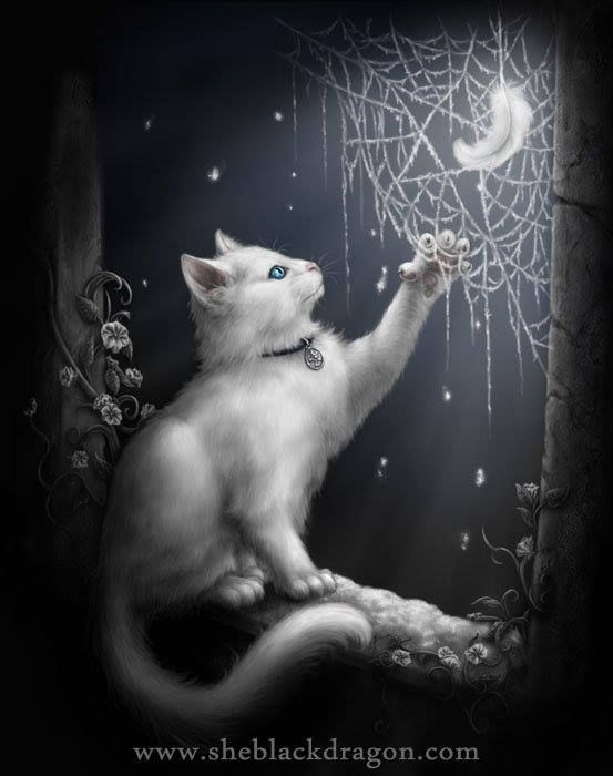 Cute witches cat at night with the spider web.