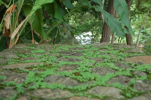 ...y va brotando, brotando, como el musguito en la piedra (Parque Cachamay,2009)