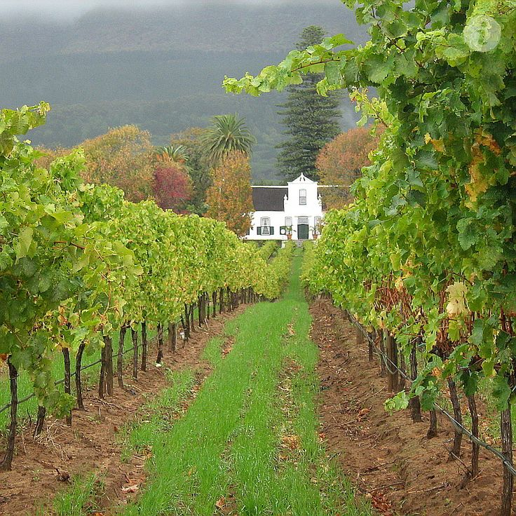 Constantia vineyards, Cape Town, South Africa.