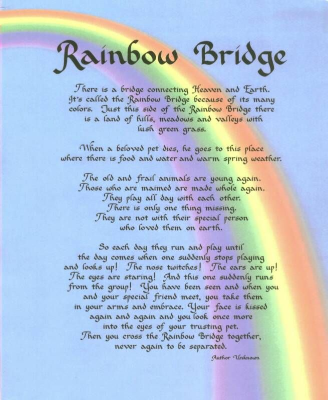 free printables pet rainbow bridge | Rebersteins Would Like To Pay Tribute To Your Beloved Best Friend Who ...