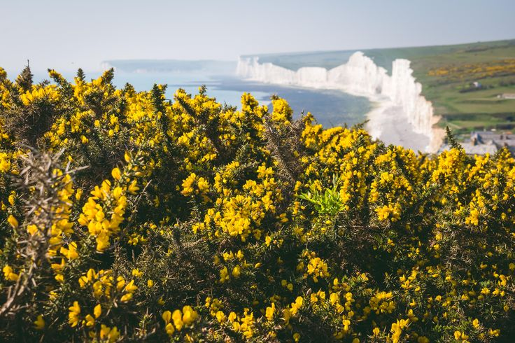 Only an hour by train from London Eastbourne is home to white cliffs towering over the English Channel. Some are over 400 feet tall with lush green grass growing right up to the edge. [OC]