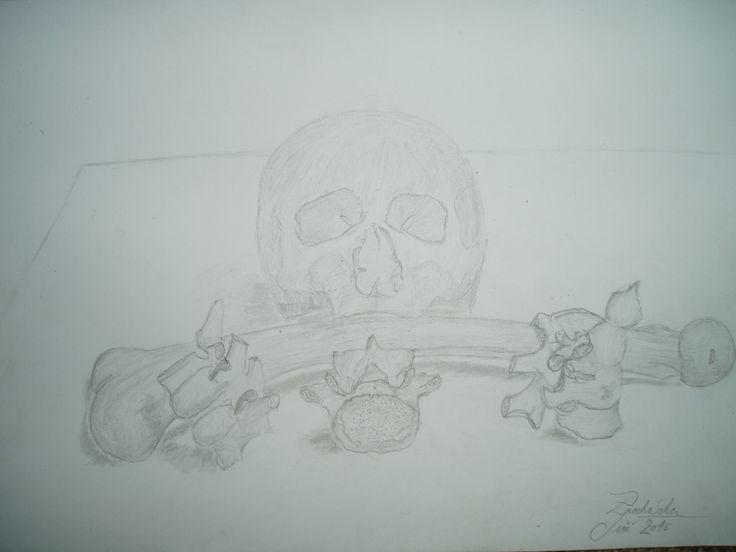study bones