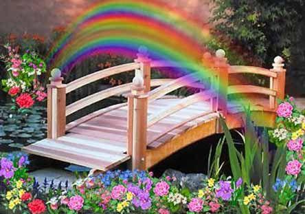 Rainbow Bridge ..my molly crossed 3  years back