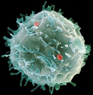 Breathtaking Scanning electron micrograph of a stem cell Regenerative therapies such as stem cells have the potential to change the face of medicine over the next 20 years. Description from pinterest.com. I searched for this on bing.com/images