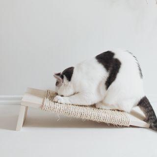 DIY cat scratching post                                                                                                                                                     More