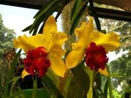 Amazing Orchide flower in Kandy, Sri Lanka. For an unique holiday experience contact us: susantha2803@gmail.com