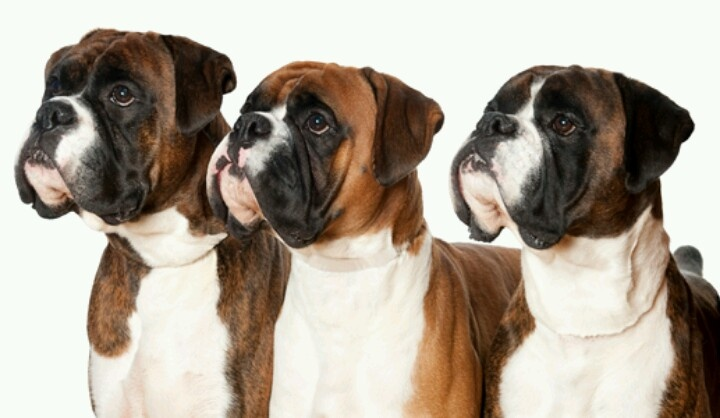 And then there were 3; Moe, Larry, & Curley; the 3 Amigos; The Marx Brothers; The 3 Musketeers; The 3 Tenors.    Adorable.