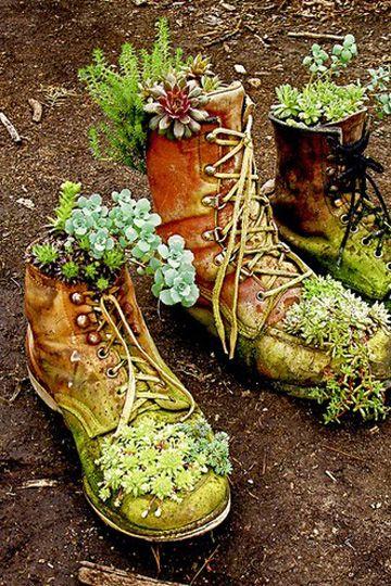 suculentas em botas de trabalho antigo