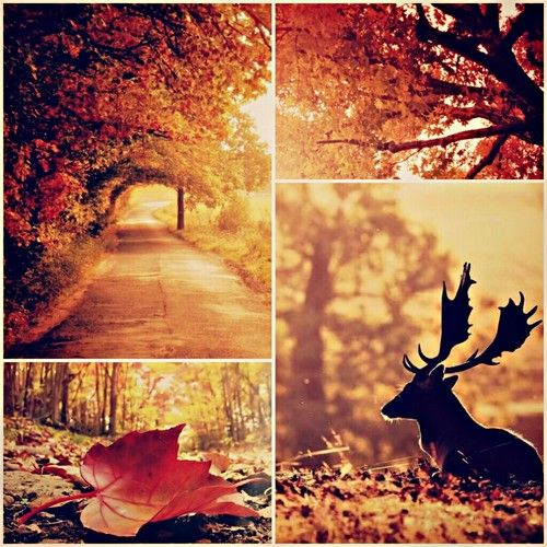 Imagen de autumn, leaves, and fall