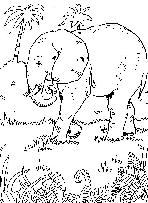 Line Drawing Jungle : Elephant jungle scene from quot coloring pages
