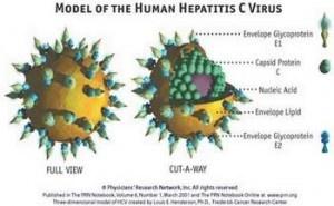 Penyakit  Hepatitis C secara umum disebabkan oleh virus hepatitis C, namun ada juga beberapa pasien penderita penyakit hepatitis c yang disebabkan oleh gaya hidup yang sering meminum minuman beralkohol.