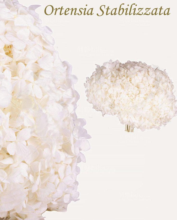 In promozione. Fiore Ortensia Stabilizzato, specificatamente chiamato Hydrangea.Per qualsiasi contesto di decorazione floreale e non solo, poichè possono essere utilizzati sia per cerimonie, sia come complemento di arredo, sia come segnaposto e sia come idea regalo.