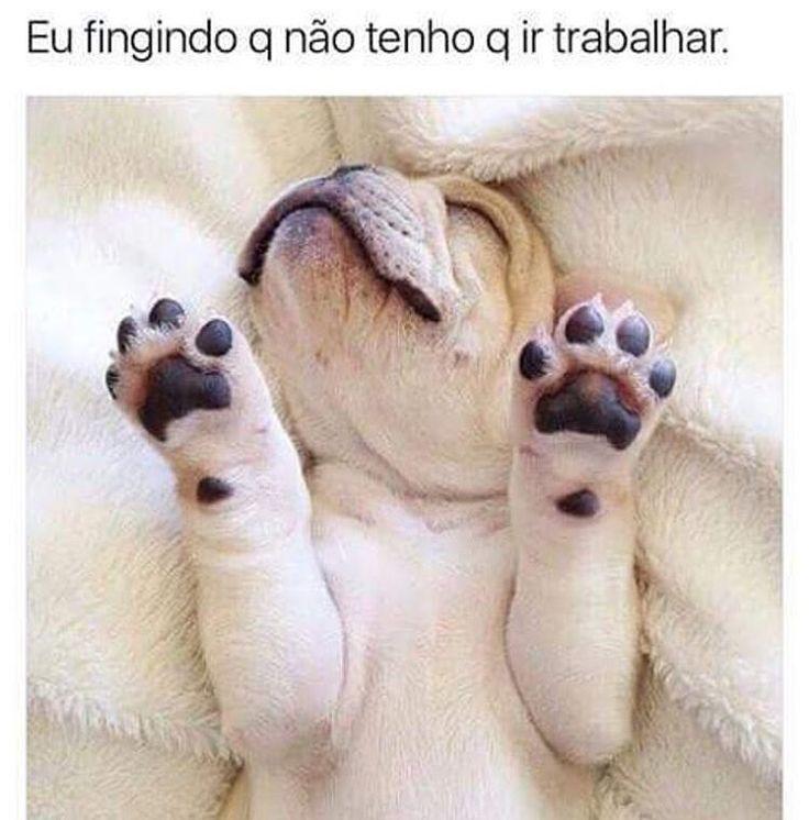 ❤❤ #cachorro #filhode4patas #segundafeira #cachorro étudodebom #gato #amogatos #amocachorro #petmeupet