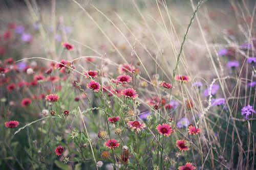 wild flowers in the country....