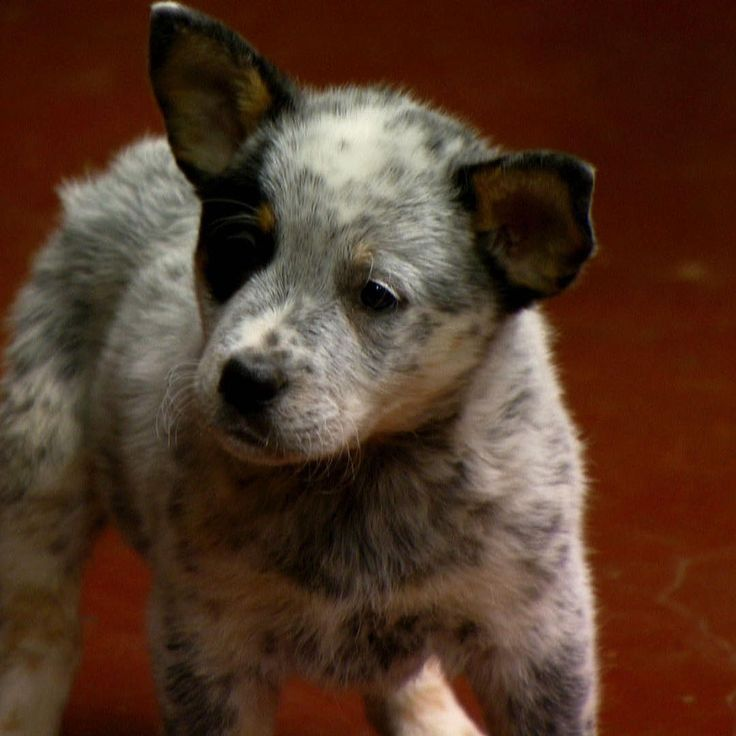 Street Outlaws - Meet Susie, Farmtruck's new puppie !