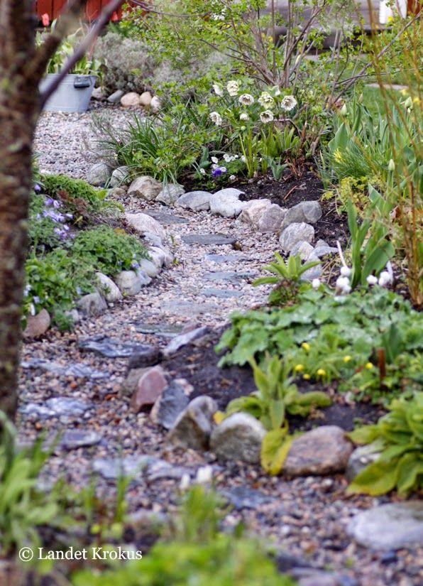 Landet Krokus. Bild med vårkänsla. Påminner om min grusgång. Jag borde bara hitta lite större stenar för en lika vacker kant.