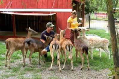 Deer Farm Exotic Petting Zoo - Go wild at the Deer Farm Exotic Petting Zoo in Sevierville, Tennessee! Deer, Goats, Kangaroos, Camels, Wallabies, Exotic Cattle and Zebras!