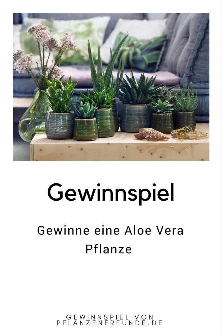 Gewinnspiel - Zimmerpflanze zu gewinnen. Pflanzenfreunde.de verlosen die aktuelle Pflanze des Monats August: Aloe Vera. Eine dekorative Pflanze mit geringem Pflegebedarf