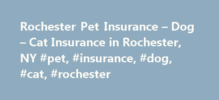 Rochester Pet Insurance – Dog – Cat Insurance in Rochester, NY #pet, #insurance, #dog, #cat, #rochester http://massachusetts.nef2.com/rochester-pet-insurance-dog-cat-insurance-in-rochester-ny-pet-insurance-dog-cat-rochester/  # Rochester Pet Insurance Dog Parks in Rochester Durand Eastman Park Ellison County Park Brown Square Park Rochester is New York's third most populous city and is often listed as one of the top 10 most livable cities. Kodak and Bausch Lomb call Rochester home and Xerox…