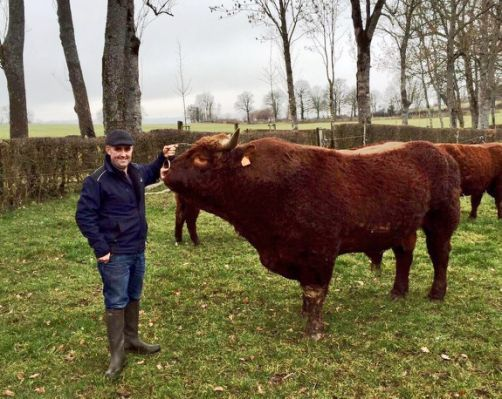 Beef cattle for sale from David
