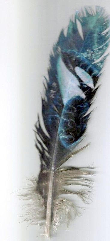 orca feather painting by *rushredkryptonite on deviantARTrushredkryptonite.deviantart.com