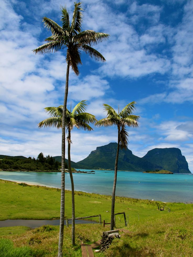 The view from the bottom is as spectacular as the view from the top!   #NewSouthWales #JustParadise www.lordhoweisland.info