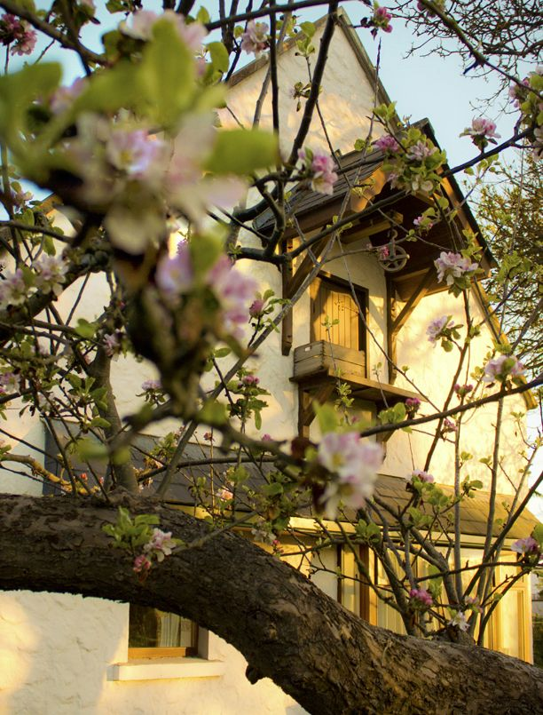 Garden Cottage gable through the apple blossom in Spring.