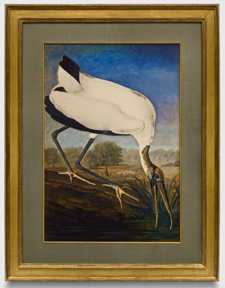 Houston Map Framed%0A Audubon Wood Ibis  watercolor series in a closed corner    karat gold frame   a