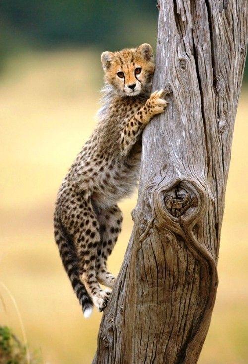 Leicht Und Kreativ Kratzbaume Fur Katzen Selber Bauen Katzen Tiere Schon Und Wilde Katzen