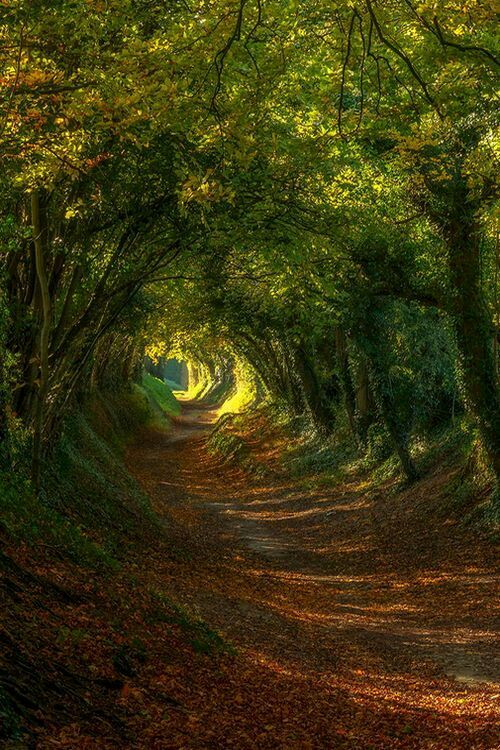 Not the exact picture but we have an old road on our farm that looks exactly like this.
