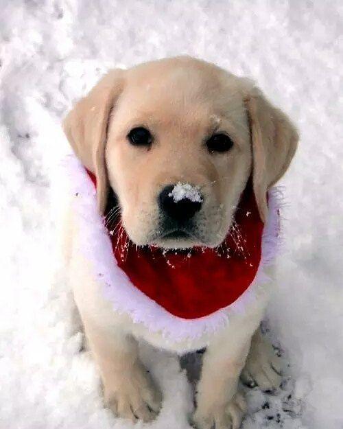 Snow angel...: