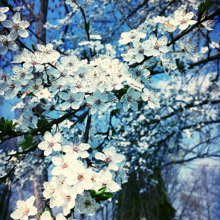 Oltre 25 fantastiche idee su giardino fiori bianchi su for Fiori piccoli bianchi