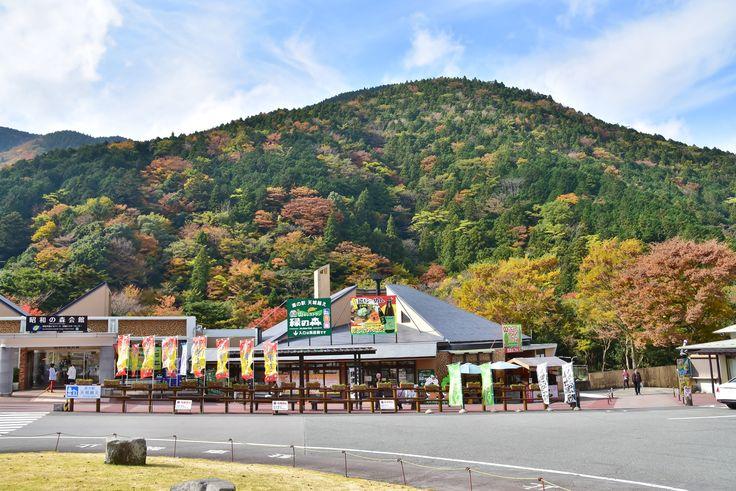道の駅天城越え 2016.11