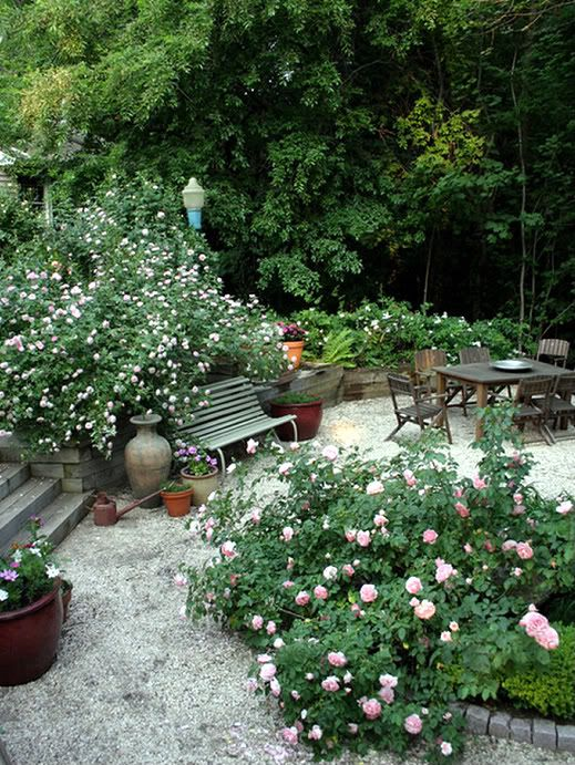 141 best Rose garden images on Pinterest Landscaping Beautiful