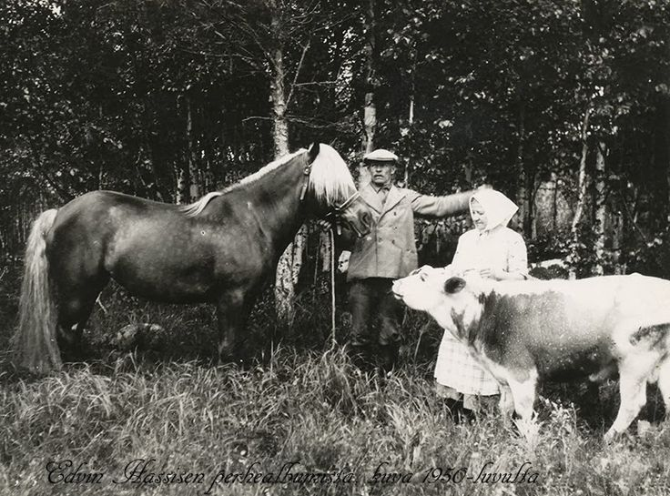 Finnish grandparents, Finnhorse and Eastern Finland cow ... Grandma P. went back to Finland to visit her family farm in 1945 ... This photo is so much like the ones she brought back (horses, cows, clothes). The grandma is wearing a huivi (scarf) just like my grandmothers and great-grandmothers here in America did!
