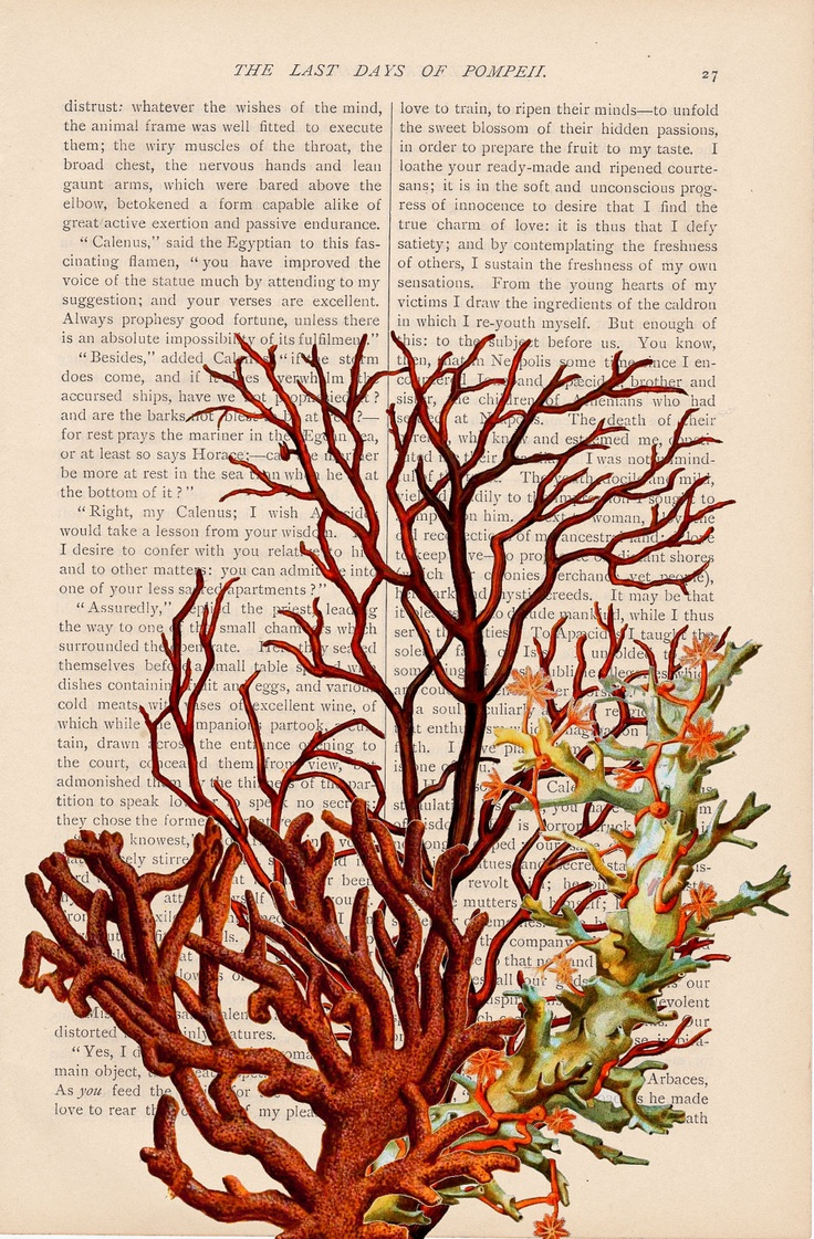 Red coral painting popular red coral print buy cheap red coral print - 315 Best Coral Reefs Atoll Reefs Barrier Reefs Fringing Reefs Images On Pinterest Coral Reefs Coral And Botanical Illustration