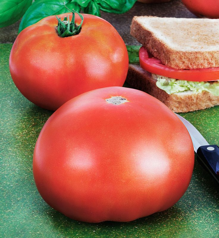 Park S Whopper Improved Tomato Is Known For Its High 400 x 300