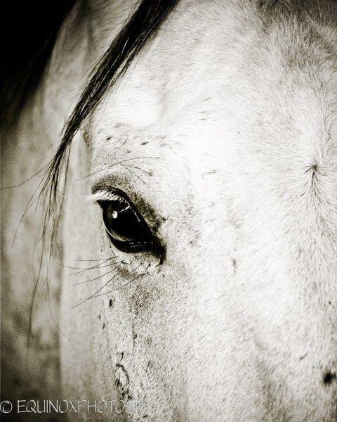 I adore photos of Horses