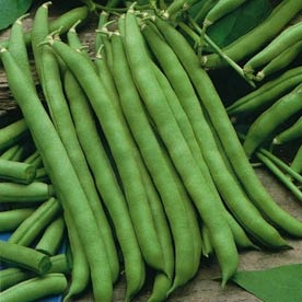 Pole Beans Days To Maturity