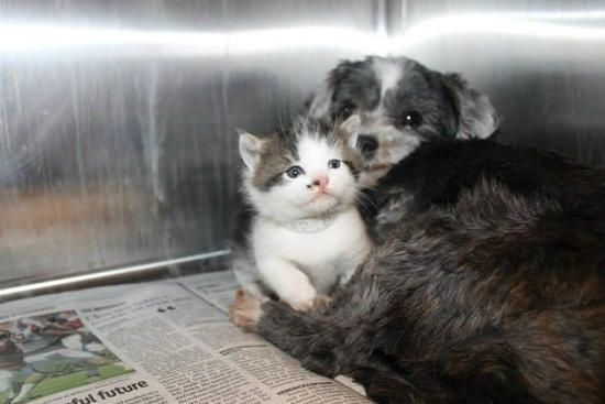 Rescue Dog Found Nursing An Abandoned Kitten  YAY!! They are now together in their forever home!!