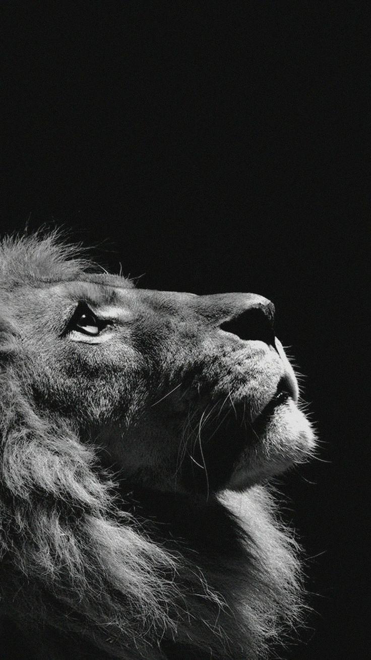 60 süße Tiere iPhone Hintergrundbilder, die Sie gerne herunterladen würden
